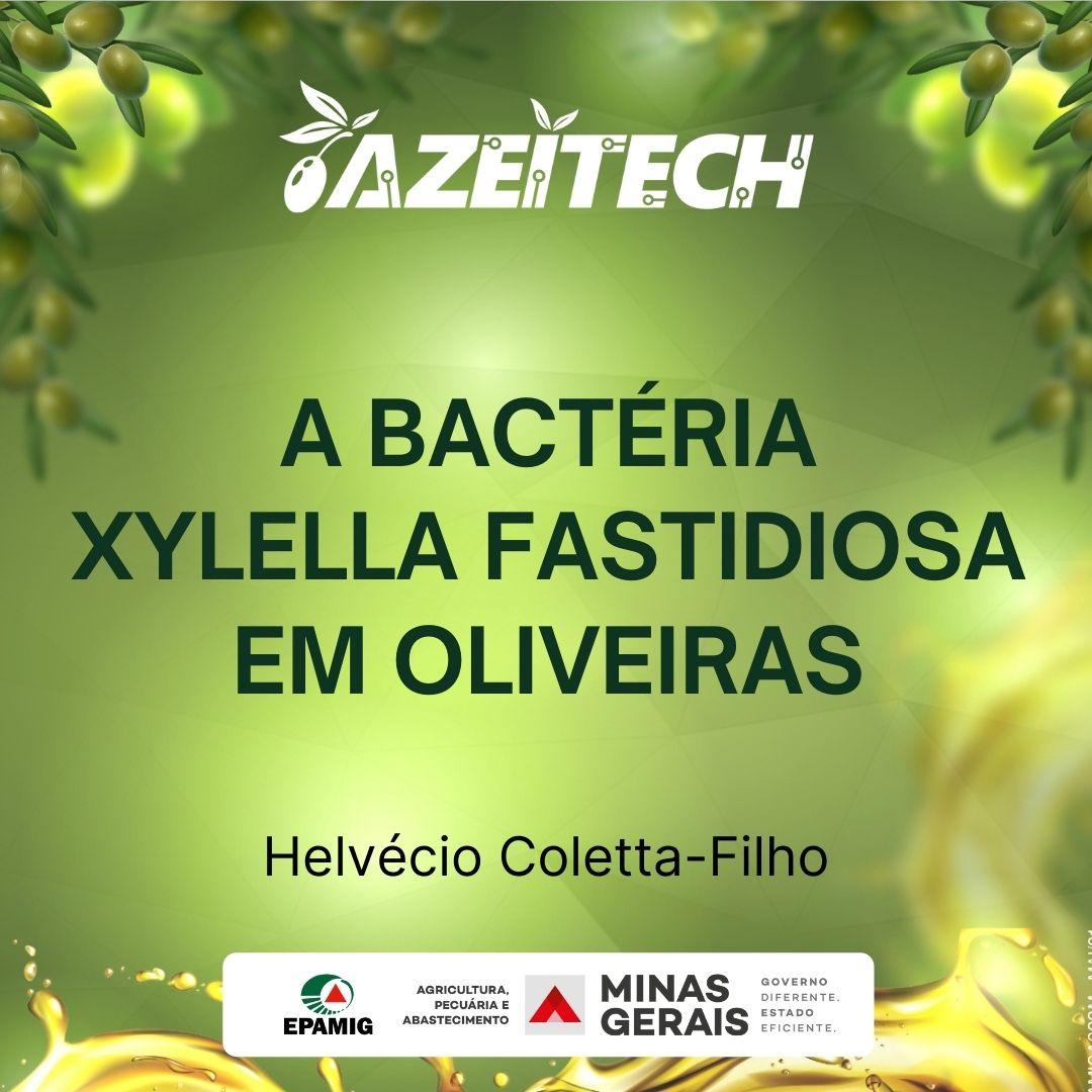A bactéria Xylella fastidiosa em oliveiras