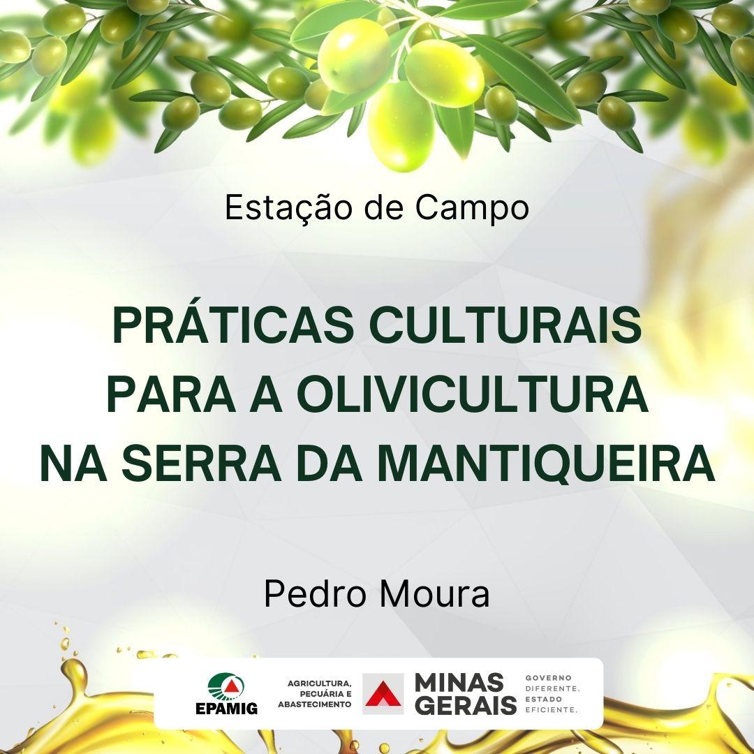 Práticas culturais para a olivicultura na Serra da Mantiqueira