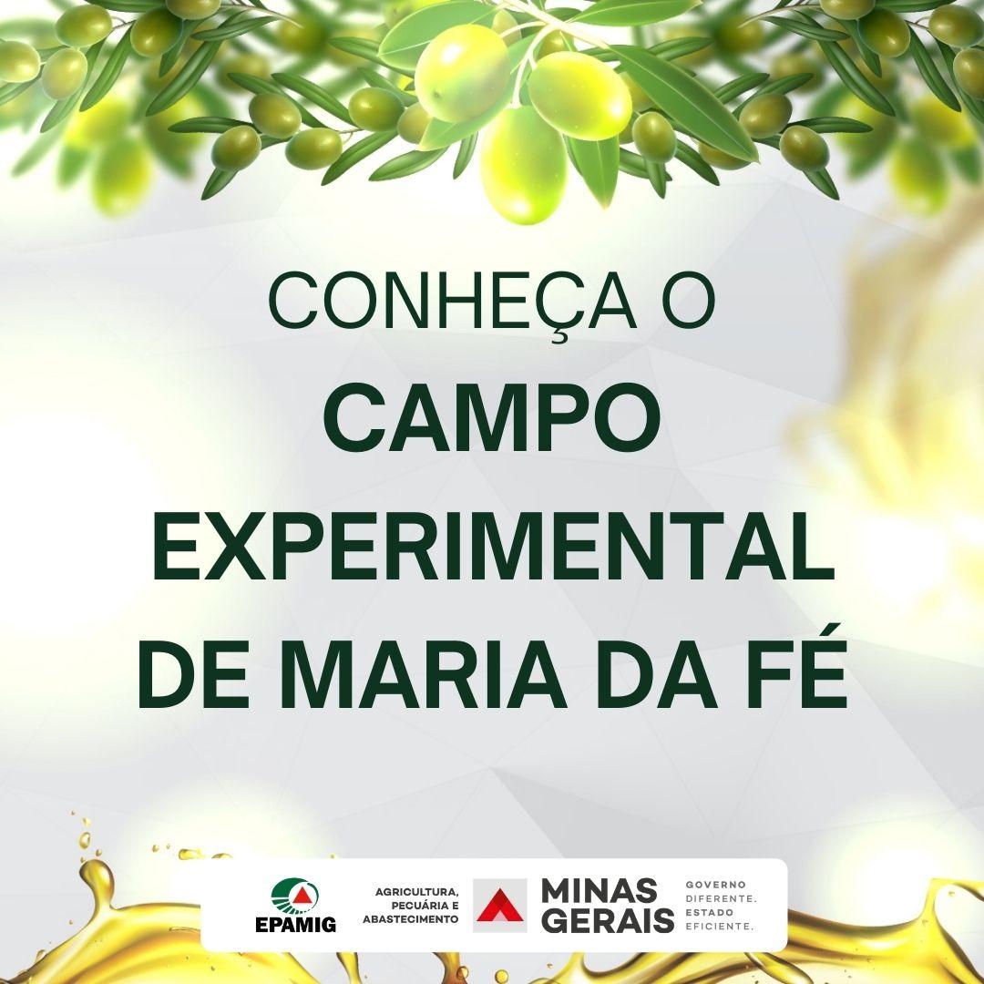 Conhecendo o Campo Experimental de Maria da Fé